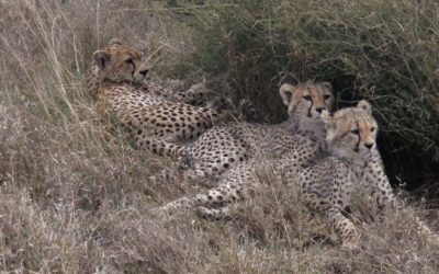 The Glimpse of Northern Tanzania