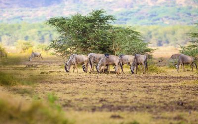 6 Days / 5 Nights: Lodge Safari