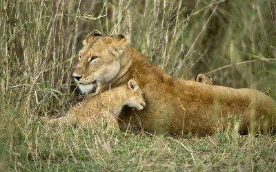 7 Days / 6 Nights: Private Lodge Safari
